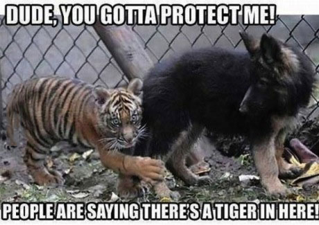 dude you gotta protect me, people are saying there's a tiger in here, meme
