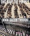 omg save the puppies, mmm bacon though, hypocrisy, meme