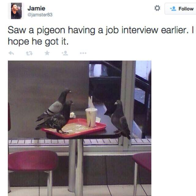 saw a pigeon having a job interview earlier, i hope he got it