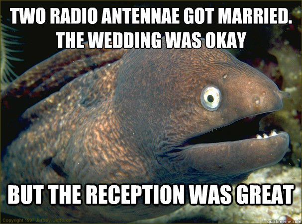 two radio antennae got married, the wedding was okay but the reception was great, bad joke eel, meme
