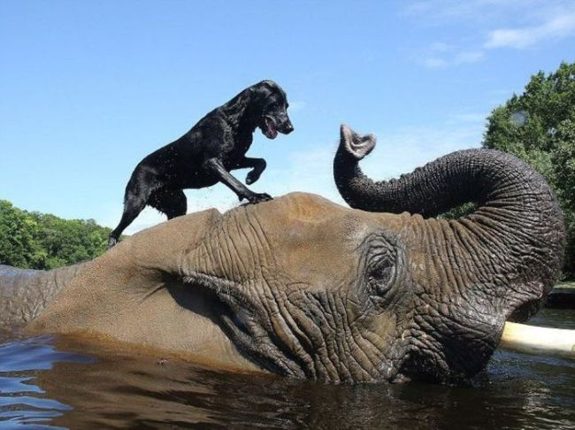 dog standing on top of an elephant