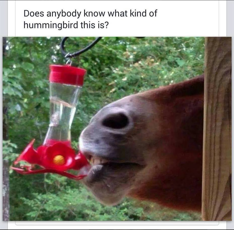 does anyone know what kind of hummingbird this is?, horse eating from bird feeder