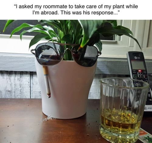 i asked my roommate to take care of my plant while i'm abroad, this was his response, plant wearing sunglasses while smoking and drinking