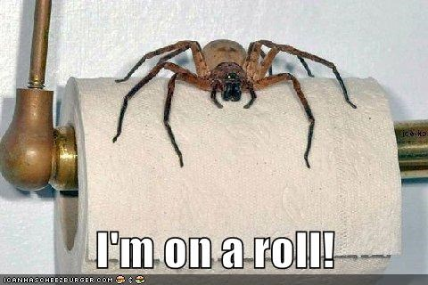 i'm on a roll, spider on a roll of toilet paper