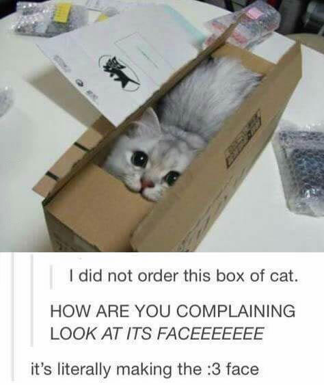 i did not order this box of cat, how are you complaining look at its face, it's literally making the :3 face