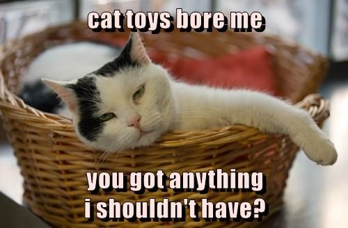 cat toys bore me, you got anything i shouldn't have?, cat logic, meme