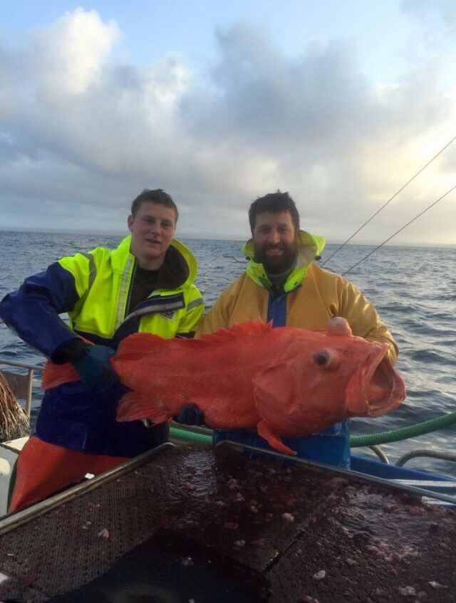 two fishermen catch giant goldfish in ocean, wtf