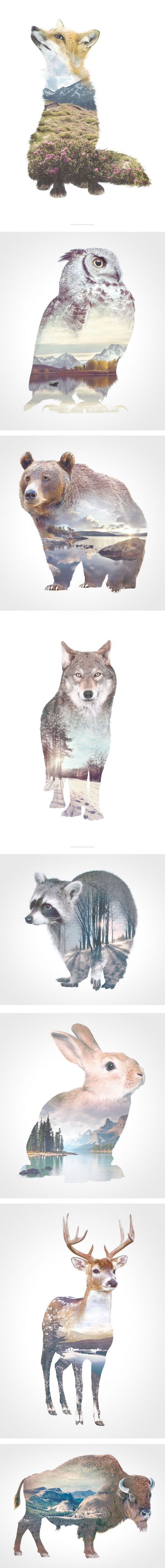 a series of double exposures of animals and wildernesses, wildlife photography