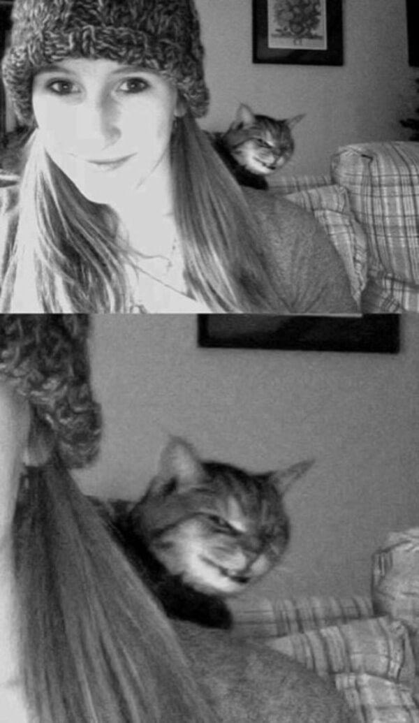 laptop photo of a girl gives cat good photobomb opportunity