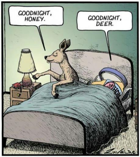 goodnight honey, goodnight deer, absurd, lol, wtf