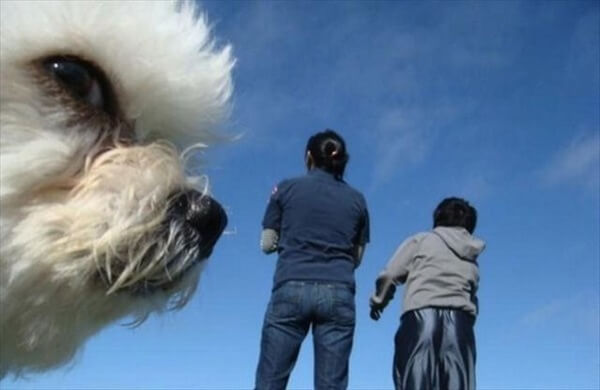 two people looking at a giant dog, dog photobombs timer photo