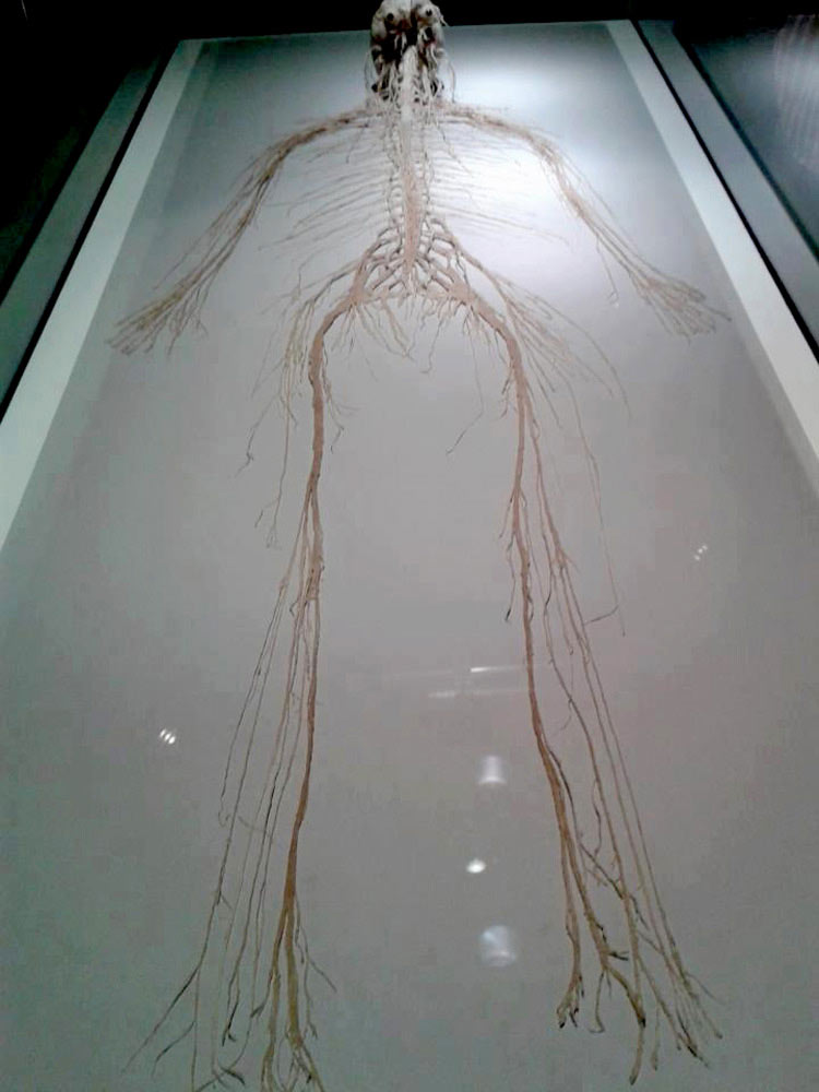 this is where your thoughts are kept, every other part of your body is used to protect and sustain this, this is you, complete human nervous system