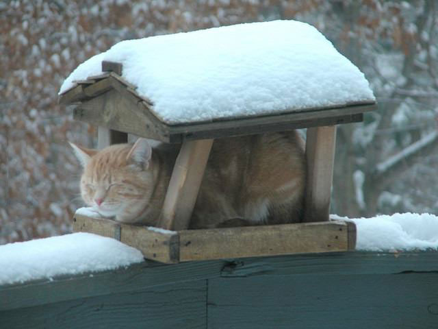 i'm still trying to find out what kind of bird this is, cat in bird house to be protected from snow