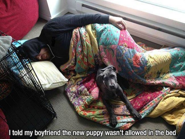 i told my boyfriend the new puppy wasn't allowed in the bed, sleeping on the floor