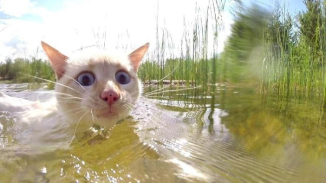wide eyed cat swimming in a swamp