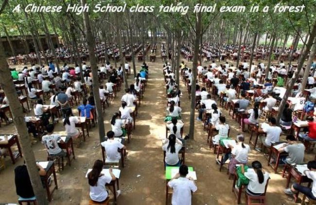 a chinese high school taking final exam in a forest