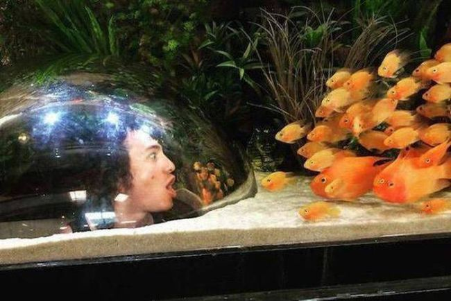 underwater air bubble glass for fish observation