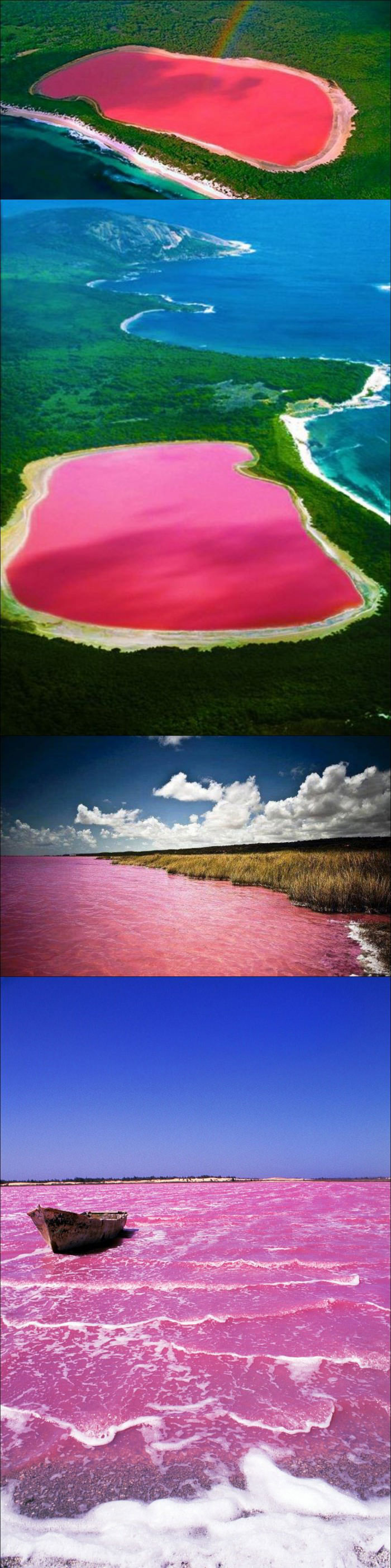 lake hillier, australia, the only living organism in it dunaliella salina causes the salt content in the lake to create a red dye