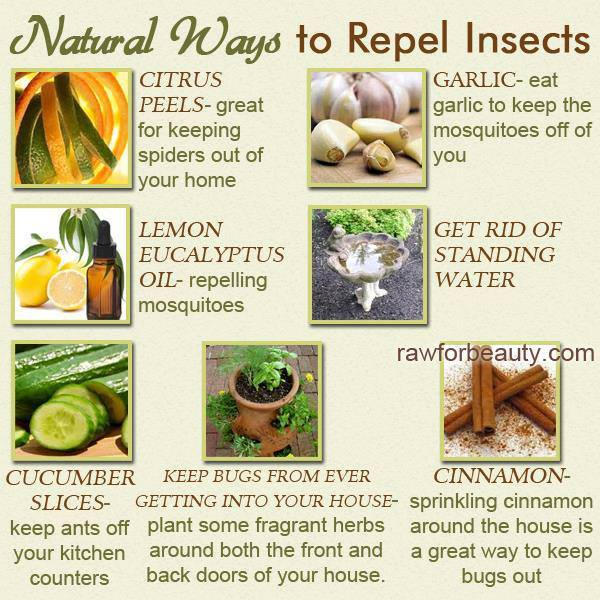 natural ways to repel insects, citrus peels, garlic, lemon eucalyptus, get rid of standing water, cinnamon, dyk