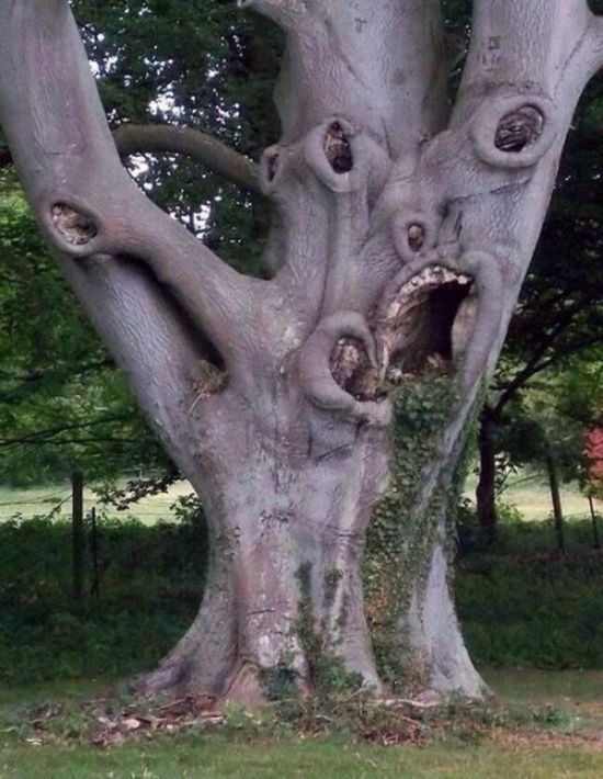ridiculously scary tree, creepy face like features on old tree
