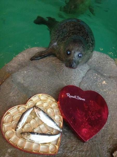russell stover box for seals, fish in a chocolate box