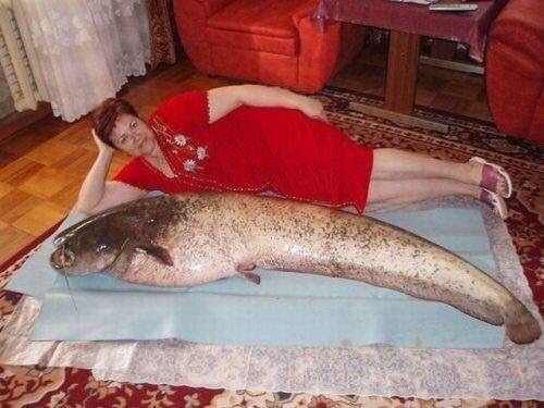 giant catfish is bigger than this woman