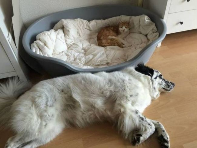 cat sleeping in dog's bed and dog sleeping on the floor