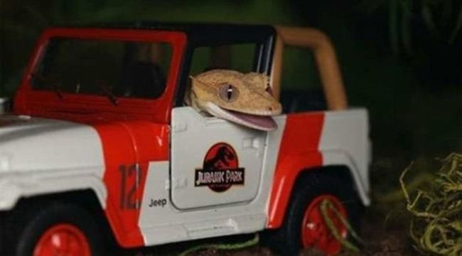 lizard in tiny jurassic park car, lol