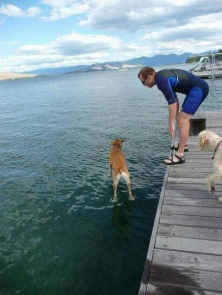 jesus dog can fetch in harsh conditions, dog apparently standing on water, timing