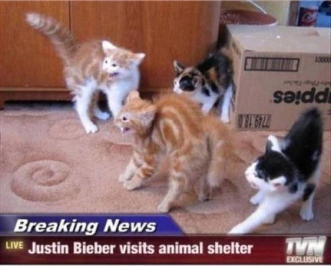 breaking news justin bieber visits animal shelter, hissing kittens