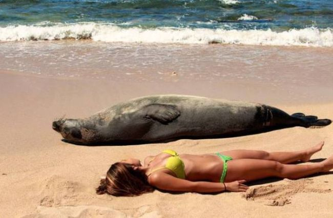 can you spot the differences, girl lying on beach next to sea lion