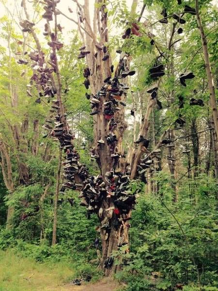 you know that this forest is run by a gang when, tree full of pairs of shoes