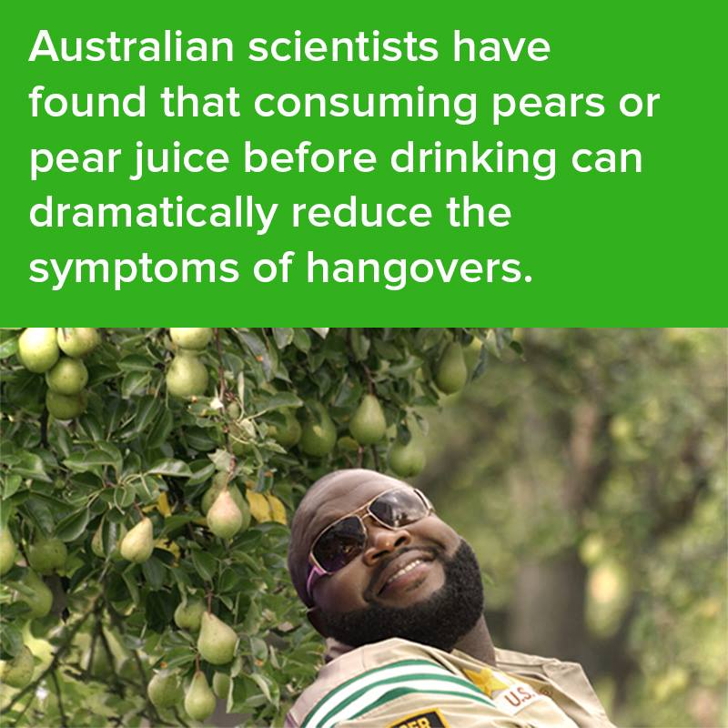 australian scientists gave found that consuming pears or pear juice before drinking can dramatically reduces the symptoms of hangovers