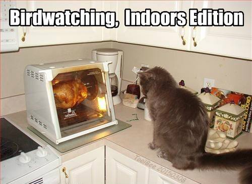 birdwatching indoor edition, cat staring at rotisserie chicken, meme