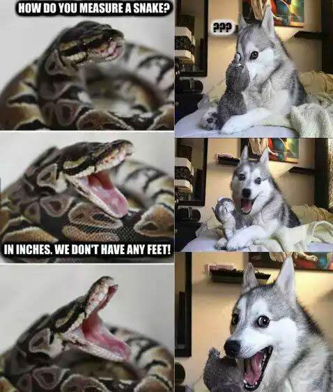 how do you measure a snake?, in inches we don't have feet, pun dog and pun snake, meme