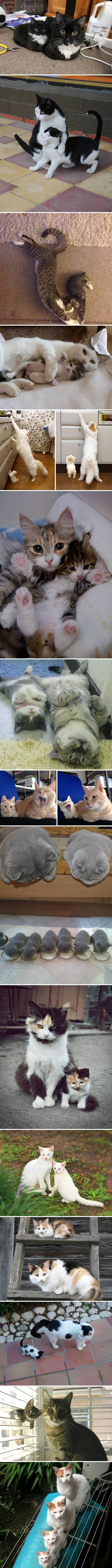 cat parents and their mini me's