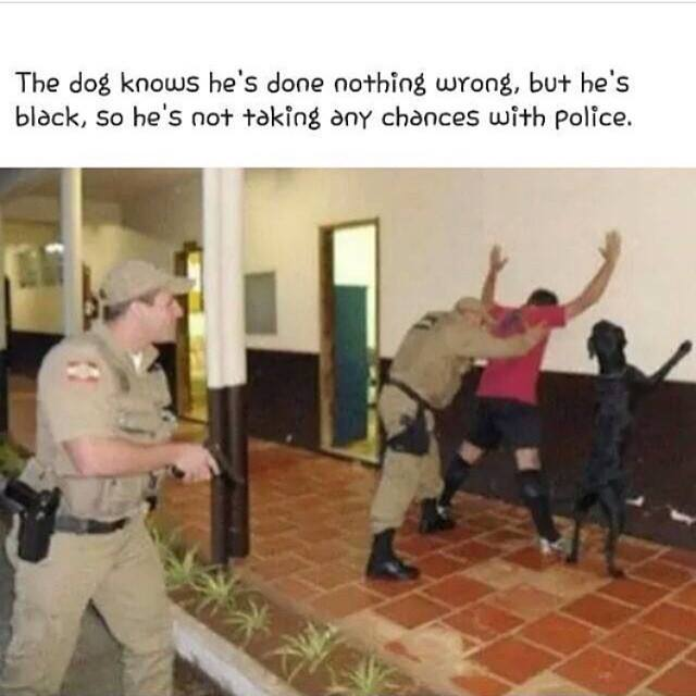 the dog knows he's done nothing wrong but he's black so he's not taking any chances with police