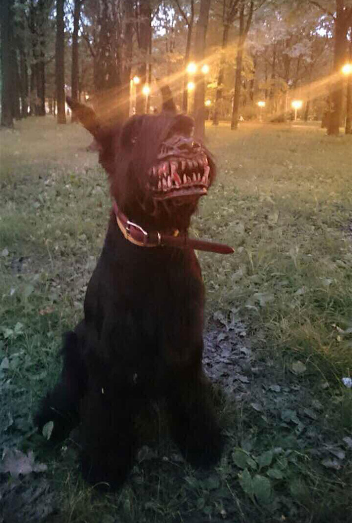 here's a great muzzle you can use while walking your dog in the woods