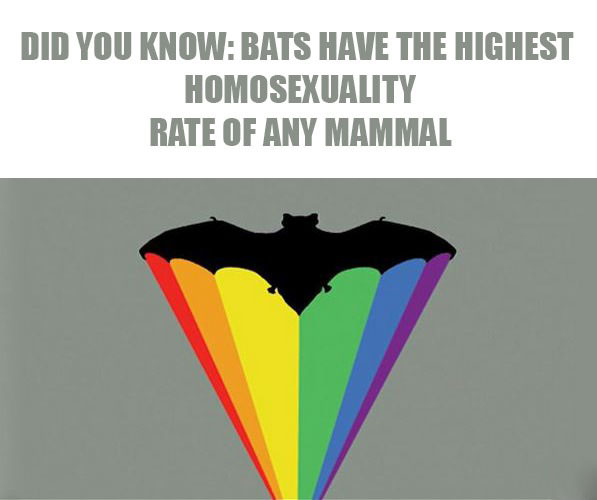 did you know that bats have the highest homosexuality rate of any mammal