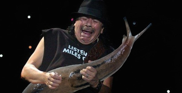 guitar solo faces make a lot more sense when guitars are replaced with giant slugs