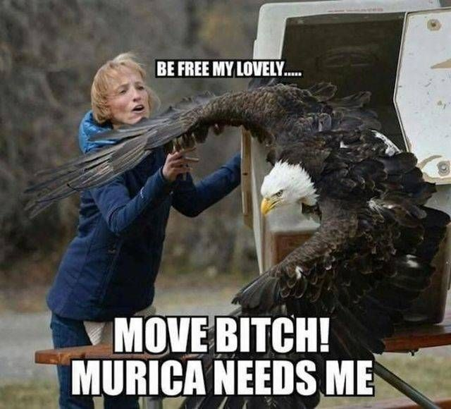 be free my lovely, move bitch murica needs me, bald eagle, meme