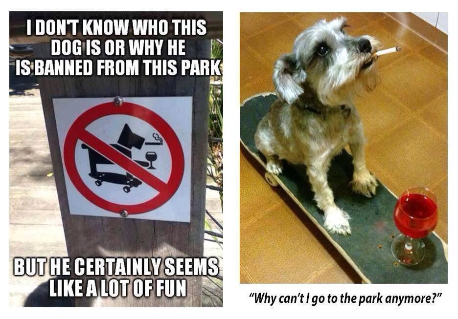 i don't know who this dog is or why he is banned from this park, but he certainly seems like a lot of fun, why can't i go to the park anymore?