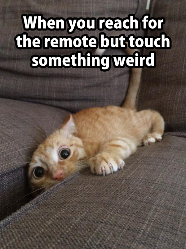 when you reach for the remote but touch something weird, cat in between couch cushions