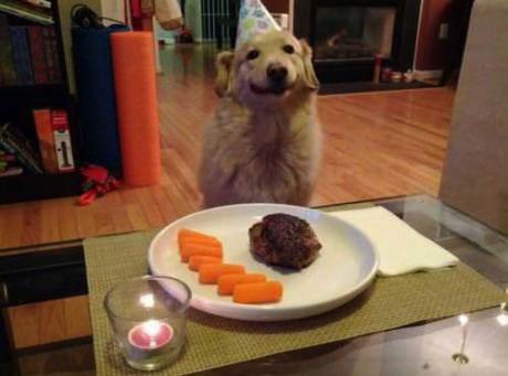 happy dog's birthday dinner