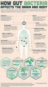 how gut bacteria affects the brain and body, infographic