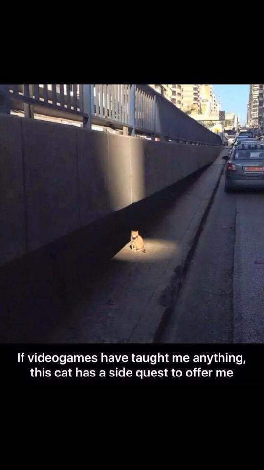 if videogames have taught me anything, this cat has a side quest to offer me