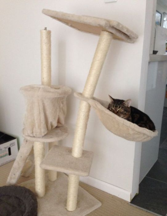 even kittens grow up, cat toy leaning over from the cat's weight