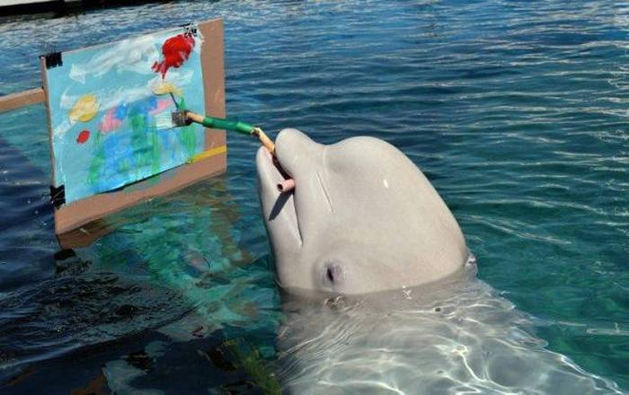 just a dolphin painting a picture of the ocean