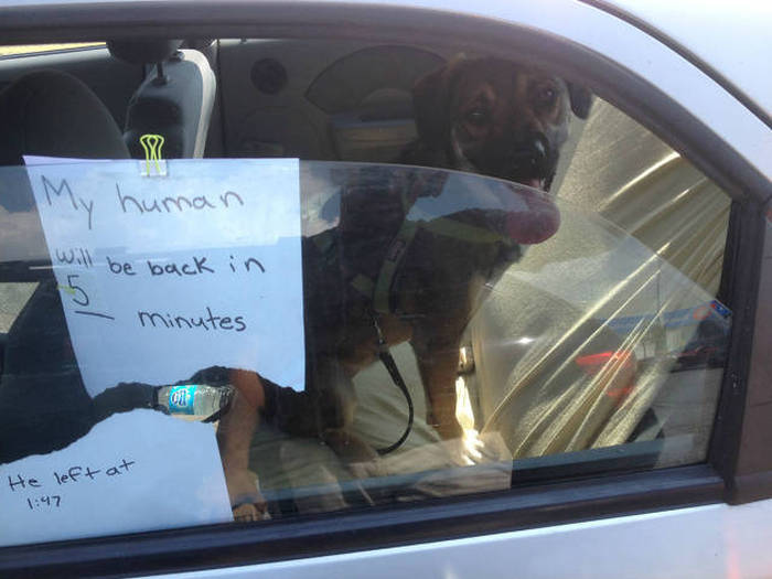 my human will be back in 5 minutes, how to leave your dog in the car properly