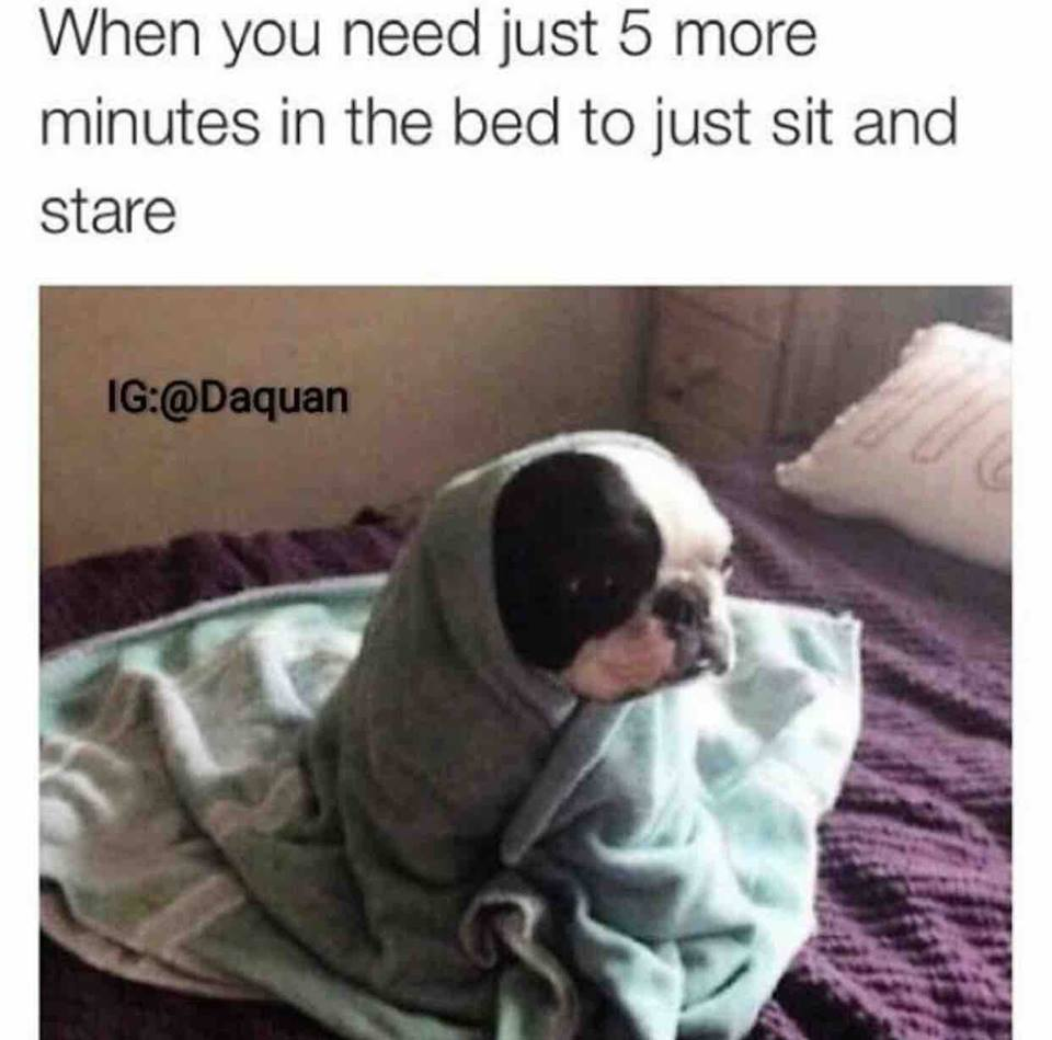 when you need just 5 more minutes in the bed to just sit and stare, dog wrapped in towel on bed